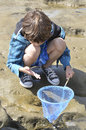 Play in tidepools young boy examines creatures caught hand net tidepool la jolla california Stock Photo