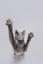 Playful cat Royalty Free Stock Photos