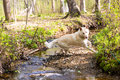 Playful dog jumping over creek Royalty Free Stock Photo