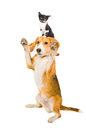 Playful dog with a kitten on the head Stock Images