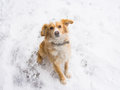Playful dog looks up and sitting in the snow Royalty Free Stock Photos