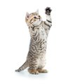 Playful funny kitten looking up. isolated on white Royalty Free Stock Photo