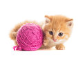 Playful kitten red with purple ball of yarn is lying on white Stock Images