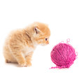Playful kitten red with purple ball of yarn is lying on white Stock Photography
