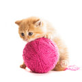 Playful kitten red with purple ball of yarn is lying on white Royalty Free Stock Photo