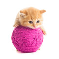 Playful kitten red with purple ball of yarn is lying on white Stock Photo