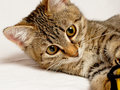 Playful kitten striped plays on a white background Stock Photography