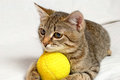 Playful kitten striped plays on a white background Royalty Free Stock Images