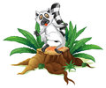 A playful lemur above the wood illustration of on white background Royalty Free Stock Images