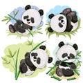 Playful panda bear baby with bamboo cartoon vector Royalty Free Stock Photo