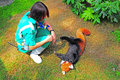 Playful red panda and trainer Royalty Free Stock Photo