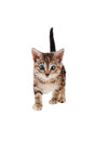 Playful striped kitten with blue eyes eyed tabby standing on a white background Stock Photos