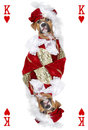 Playing card with boxer dog Royalty Free Stock Photo
