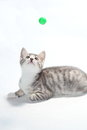 Playing cat Stock Photography