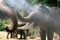 Sloni v létě
