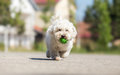 Playing fetch with cute dog Royalty Free Stock Photo