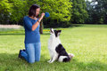 Playing fetch with her dog woman in the park border collie Stock Photos