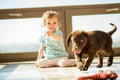 Playing fetch with my puppy cute little girl his brown labrador at home Stock Images