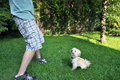Playing fetch with a young havanese dog six month old puppy in grass male owner in motion Royalty Free Stock Photo