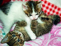 Playing kittens a pair of multicolored on a pillow Royalty Free Stock Photos