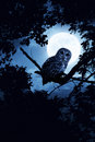 Pleine lune d owl watches intently illuminated by la nuit de halloween Image libre de droits