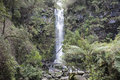 Plentiful waterfall australia in the middle of the australian forest Stock Images