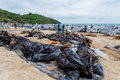 Plenty of big bags which contain of crude oil rayong thailand july and sand inside and wait for remove on ao prao beach at samet Royalty Free Stock Image