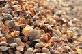 Plenty of colorful seashells Royalty Free Stock Photo