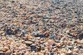 Plenty of colorful seashells on the seashore
