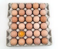 Plenty of eggs Royalty Free Stock Photography