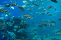 Plenty of fish in the depths the sea Stock Photography