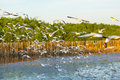 Plenty of Seagulls bird flying Royalty Free Stock Photo