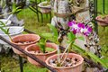 Plenty of small growing orchid flowers in the pots at the garden
