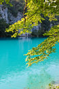 Plitvice lakes beautiful lake with tree from national park Royalty Free Stock Photos