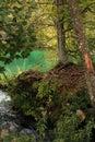 Beautiful lake with vegetation at Plitvice Lakes National Park Royalty Free Stock Photo