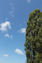 Plot the open sky with clouds and lombardy poplar Royalty Free Stock Photos