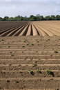 Ploughed Farm Field Stock Photos