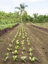 Ploughed farm land in Balamban, Cebu, Philippines Royalty Free Stock Photo