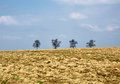 Ploughed field, spring, trees on horizon Royalty Free Stock Photography