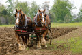 Plow Horses Royalty Free Stock Photo