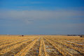 Plowed Farm Corn Field in Winter Royalty Free Stock Photo