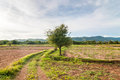 Plowed farmland with mountain background Royalty Free Stock Photo