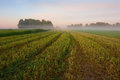 Plowed field in morning fog Royalty Free Stock Photography