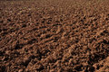 Plowed field prepared for new planting Royalty Free Stock Image