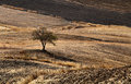 Plowed fields in Andalucia Royalty Free Stock Photo