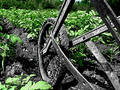 Plowing up the Garden Royalty Free Stock Photo