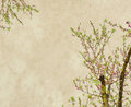 Plum blossom on old antique vintage paper background Stock Images