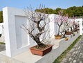 Plum bonsai Images libres de droits