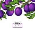 Plum branch border. Hand drawn isolated fruit. Summer food illustration. Royalty Free Stock Photo