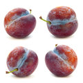 Plum fruit set Stock Images